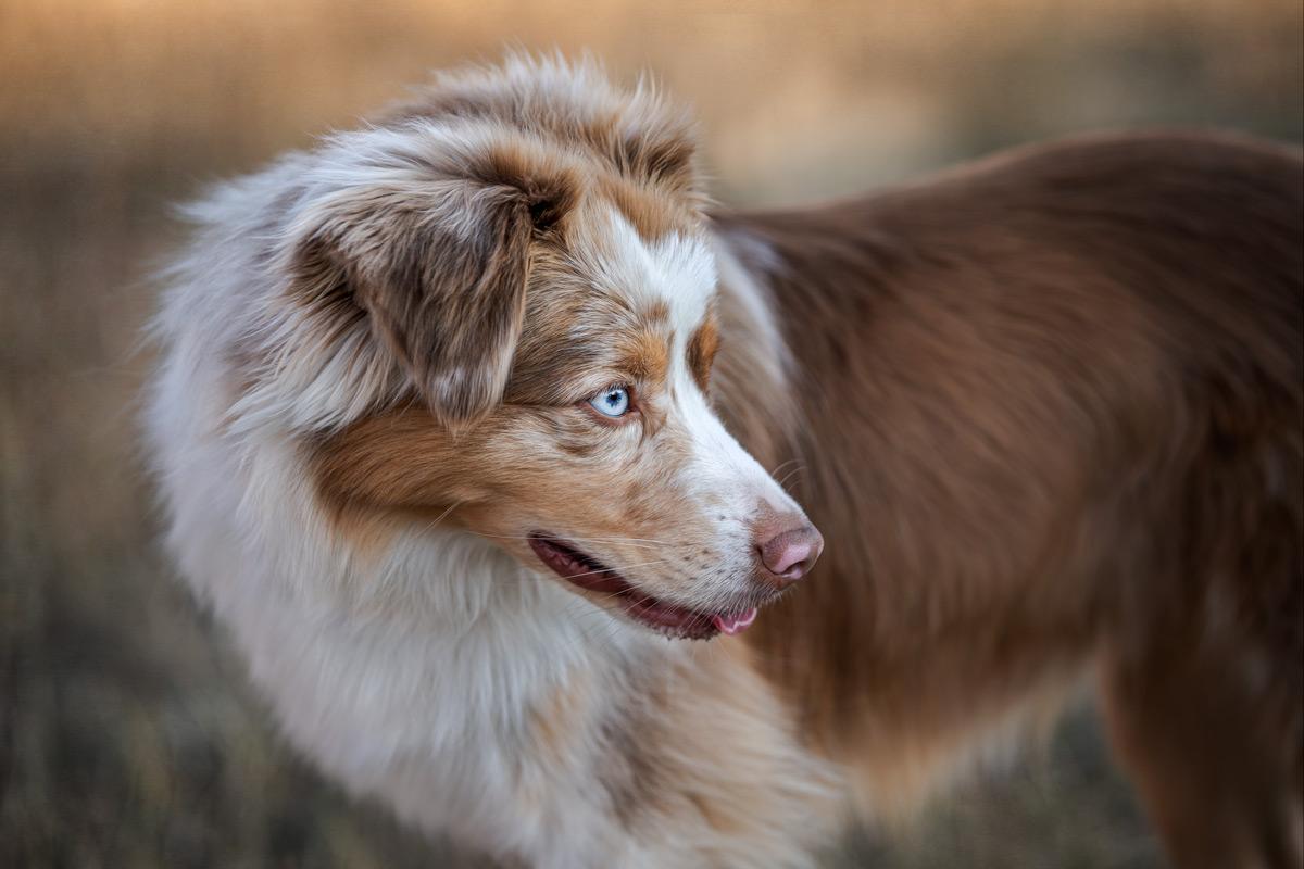Sweet Light Pet Photography